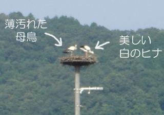 07toyooka07_002s
