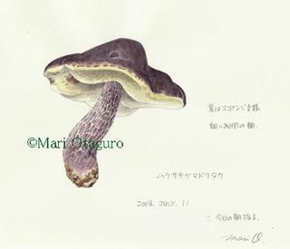 Murasakiyamadori01