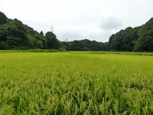 2010_08_20_touyama_0987s