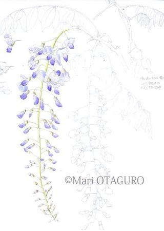 Fuji01__1