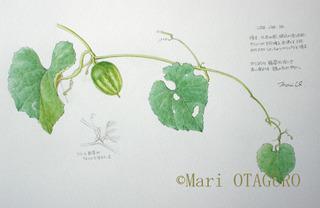 Karausuri_001s_1